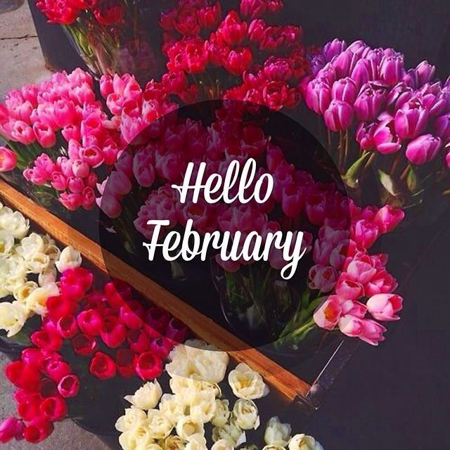 hello february flower pictures