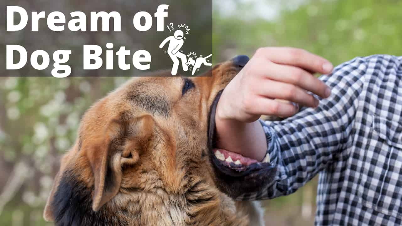 Meanings of Dreaming of Dog Bite